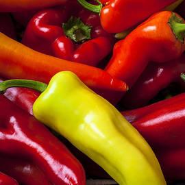 Garry Gay - Yellow pepper