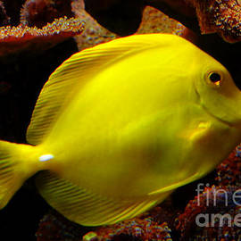 Yellow Tang by Pravine Chester