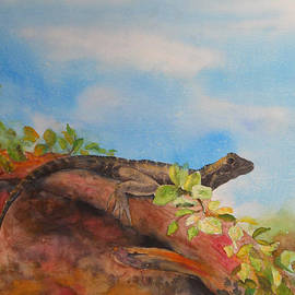 Carol McLagan - Young Australian Water Dragon