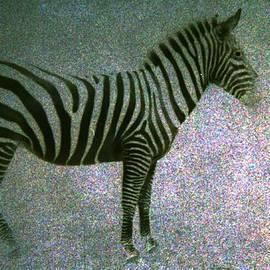 Kelly Hazel - Zebra