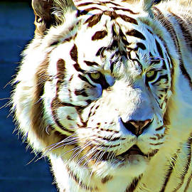 Alan Armstrong - # 3 White Tiger Portrait