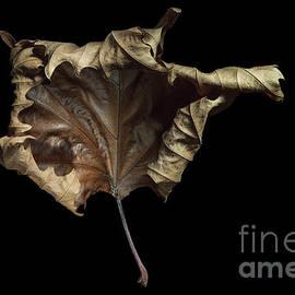 Ann Garrett -  Autumn Leaf