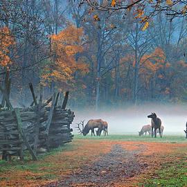 Ben Prepelka -  Oconaluftee Visitor Center Elk