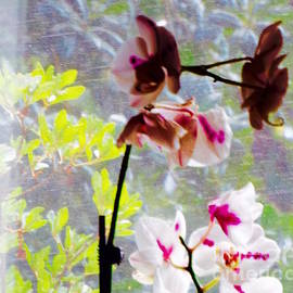 Kasha Baxter -  Orchid Life Revisit