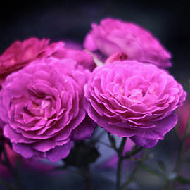 Roses By Night by Jessica Jenney