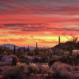 Saija Lehtonen - A Desert Winter Sunset