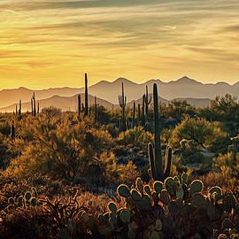Saija Lehtonen - A Golden Desert Evening in The Sonoran