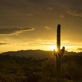 Saija Lehtonen - A Golden Saguaro Sunrise