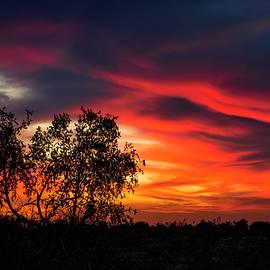 Saija Lehtonen - A Silhouette Sunset