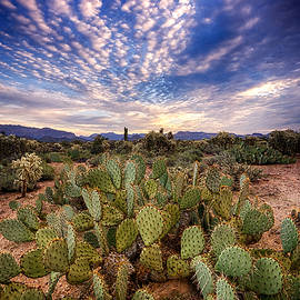 Saija  Lehtonen - A Sonoran Desert Morning