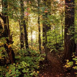 Saija  Lehtonen - A Walk in the Woods