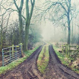 A woodland path - Tom Gowanlock
