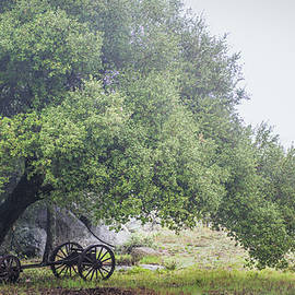 Abandoned - Joseph Smith
