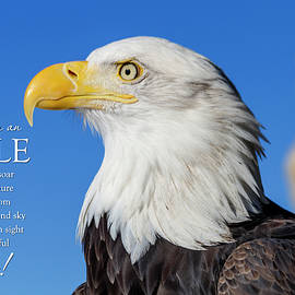 Advice From An Eagle by Teri Virbickis