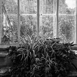 Ross Henton - Allan Gardens