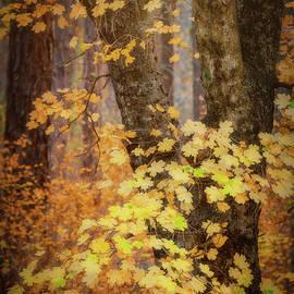 Saija Lehtonen - An Autumn Morning