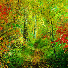 An Autumn path by Jeff Swan