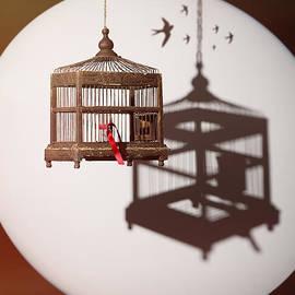 Antique Edwardian Birdcage - Amanda Elwell