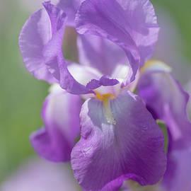 Jenny Rainbow - Aphrodite 1. The Beauty of Irises