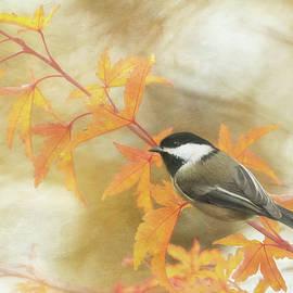 Angie Vogel - Autumn Chickadee