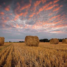 Evgeni Ivanov - Autumn field