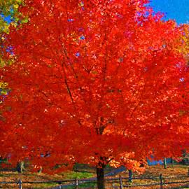Autumn Fire 2 by Allen Beatty