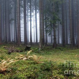 Michal Boubin - Autumn fog in the spruce forest