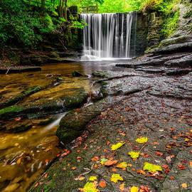 Adrian Evans - Autumn Leaves