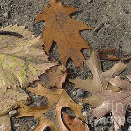 Ann Horn - Autumn Leftovers