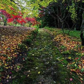Ian Mitchell - Autumn Path