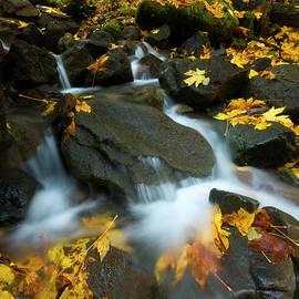 Mike Dawson - Autumn Rush