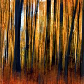 Autumn Woods by Steve Harrington