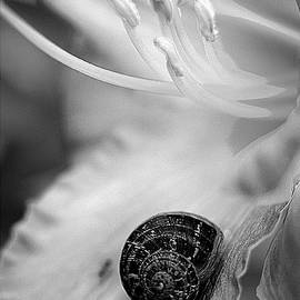B And White Floral With Snail by Clayton Bruster