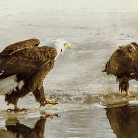 Patti Deters - Bald Eagle Series #4 - Here I Come