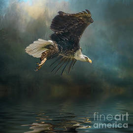 Brian Tarr - Bald Eagle swooping
