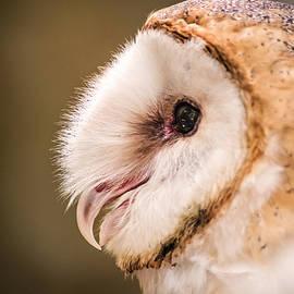 Don Johnson - Barn Owl Profile