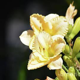 Ruth Housley - Beautiful Daylilies
