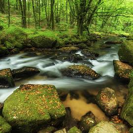 Matthew Gibson - Beautiful vibrant lush landscape of Golitha Falls in Devon in Su