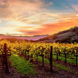 Beauty over the Vineyard - Jon Neidert