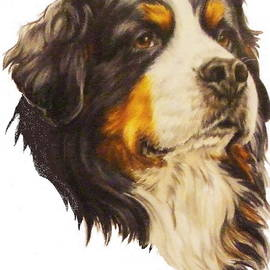 Bernese Mountain Dog in Colored Pencil by Barbara Keith