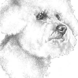 Bichon Frise in Graphite by Barbara Keith