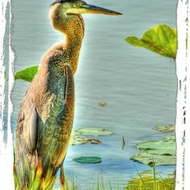 Big Bird by Sam Davis Johnson