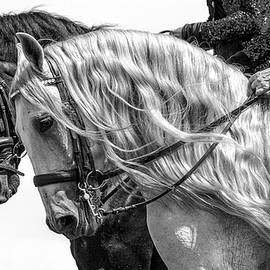 Black and White by Wes and Dotty Weber
