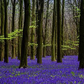 Blanket Of Blue by Kelvin Trundle