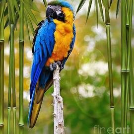 Blue and Yellow Macaw 1 by Elaine Manley