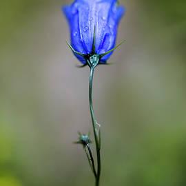 Blue Bell - Nailia Schwarz