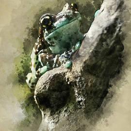 Blue Tree Frog by Jaroslaw Blaminsky