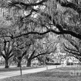 Dawna Moore Photography - Boone Hall Plantation Avenue of Oaks Mount Pleasant South Carolina