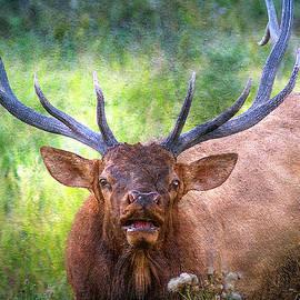 Lowell Monke - Bull Elk Bugling