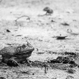 Bull Frog by Jason Smith